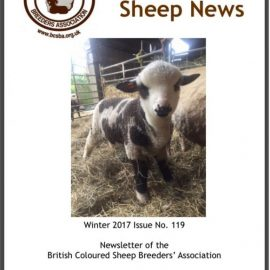 Coloured Sheep News READY to download